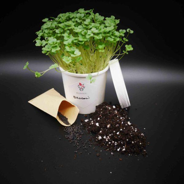 kit de culture Micro Pousses de Brocoli