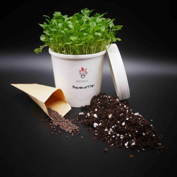 Kit de culture Micro Pousses de Roquette