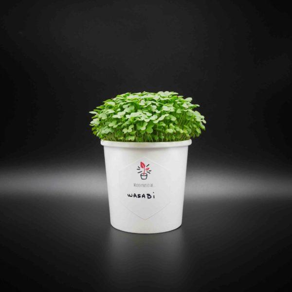 Kit de culture de Micro pousses de Wasabi